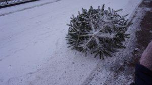 Weihnachtsbaum im Schnee.